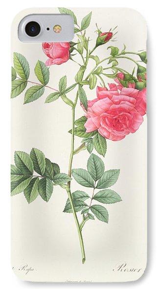 Rosa Pimpinellifolia Flore Variegato  IPhone Case by Pierre Joseph Redoute
