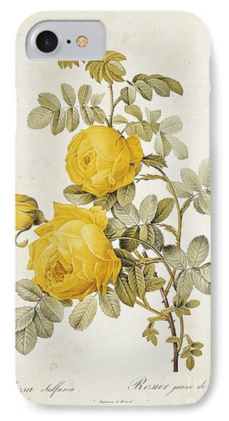 Rosa Sulfurea IPhone 7 Case by Pierre Redoute