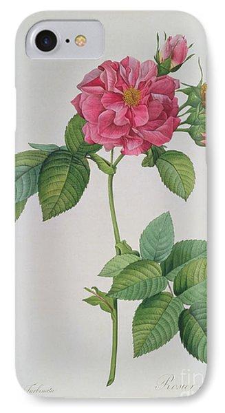 Rose iPhone 7 Case - Rosa Turbinata by Pierre Joseph Redoute