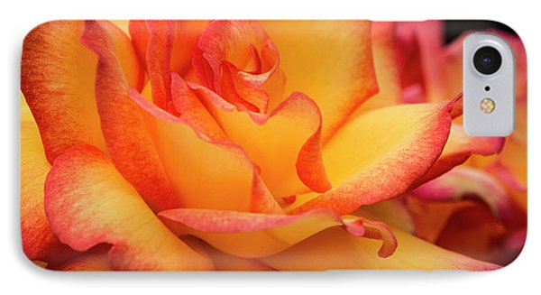 IPhone Case featuring the photograph Rose Beauty by Jean Noren