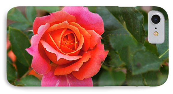 IPhone Case featuring the photograph Rose by Bill Barber