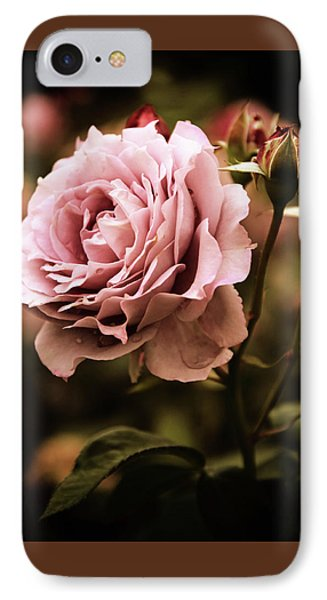 Rose Blooms At Dusk IPhone Case by Jessica Jenney