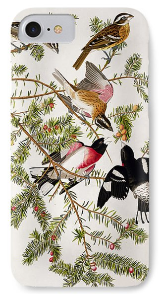 Rose Breasted Grosbeak IPhone Case by John James Audubon
