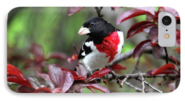 Rose-breasted Grosbeak IPhone Case by Trina Ansel