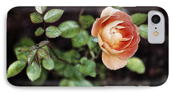 Rose IPhone Case by Stefan Nielsen