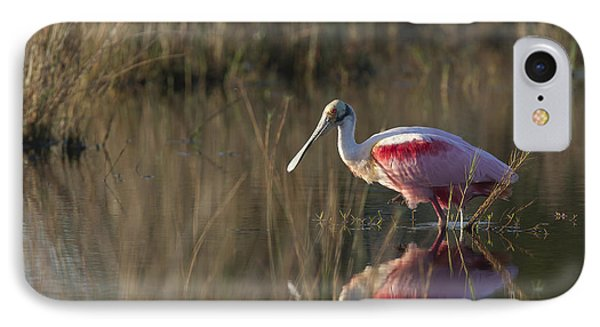 Roseate Spoonbill In Morning Light IPhone Case