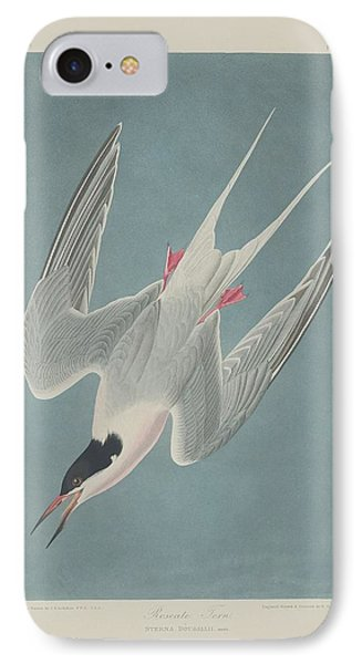 Roseate Tern IPhone Case by Dreyer Wildlife Print Collections
