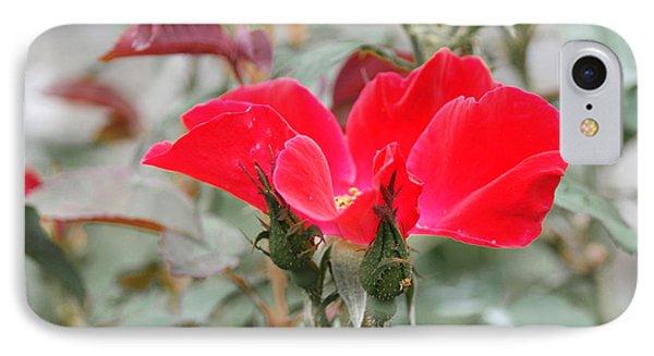 Rosebuds N Red Rose IPhone Case by Margie Avellino