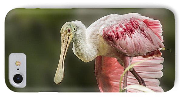 IPhone Case featuring the photograph Rosette Spoonbill Wings by Paula Porterfield-Izzo