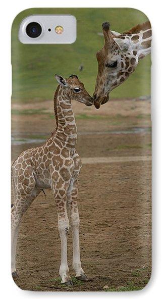 Rothschild Giraffe Giraffa Phone Case by San Diego Zoo