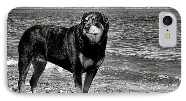 Rottweiler At The Shore IPhone Case by Olivier Le Queinec