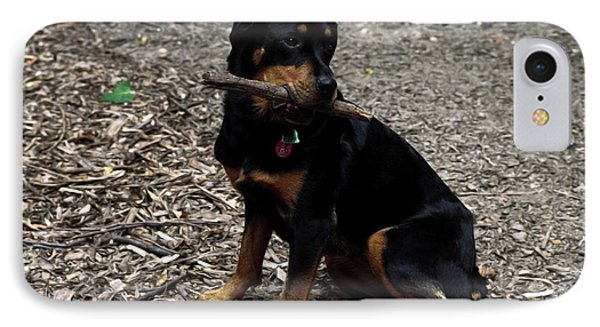 Rottweiler Dog Holding Stick In Mouth Phone Case by Sally Weigand