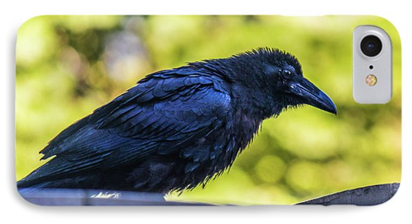 IPhone Case featuring the photograph Rough Crow  by Jonny D