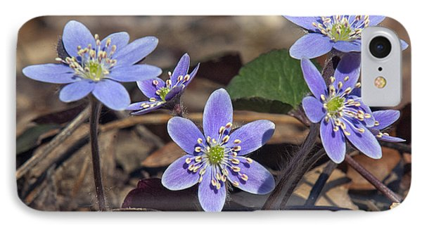 Round-lobed Hepatica Dspf116 IPhone Case by Gerry Gantt