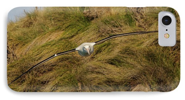 Royal Albatross 2 IPhone 7 Case by Werner Padarin