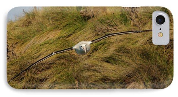 Royal Albatross 2 IPhone Case by Werner Padarin