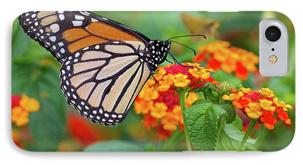 Royal Butterfly IPhone Case by Shelley Neff