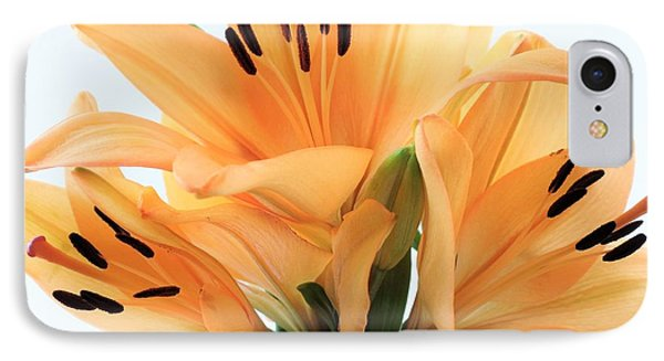 IPhone Case featuring the photograph Royal Lilies Full Open - Close-up by Ray Shrewsberry