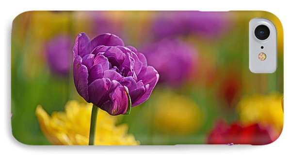 Royal Tulips IPhone Case