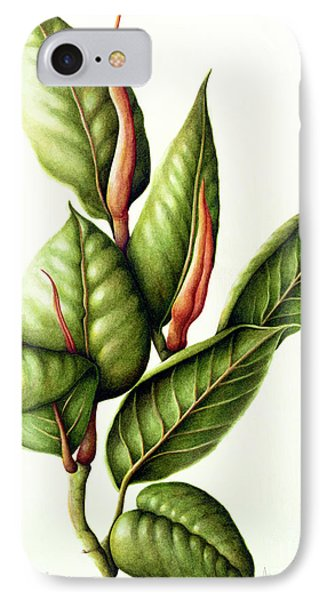 Rubber Plant IPhone Case by Annabel Barrett