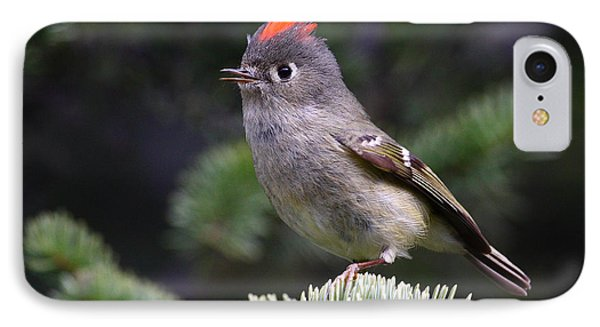 Rubycrowned Kinglet IPhone Case by Doug Lloyd
