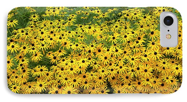 Rudbeckia Fulgida Deamii Flowers IPhone Case by Tim Gainey