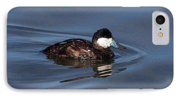 Ruddy Duck Oxyura Jamaicensis IPhone Case by Jason O Watson