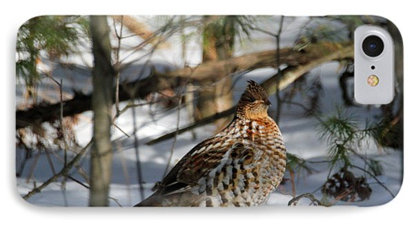Ruffed Grouse In Winter IPhone Case by Brook Burling