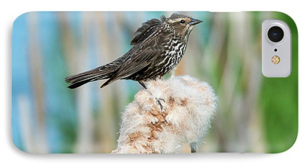 Ruffled Feathers IPhone 7 Case by Mike Dawson