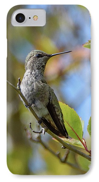 Rufous Hummingbird IPhone Case by Keith Boone