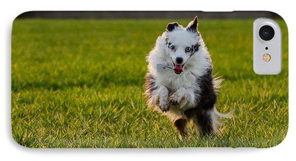 Running Australian Shepherd IPhone Case by Daniel Precht