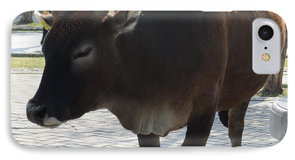 IPhone Case featuring the photograph Sacred Cow 2 by Randall Weidner