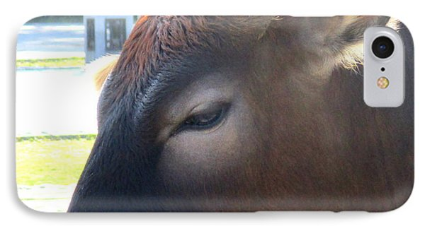 IPhone Case featuring the photograph Sacred Cow 4 by Randall Weidner