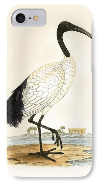 Sacred Ibis IPhone 7 Case by English School