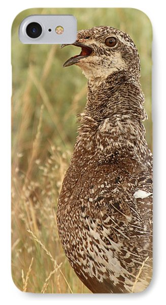 Sage Grouse Calling IPhone Case by Max Allen