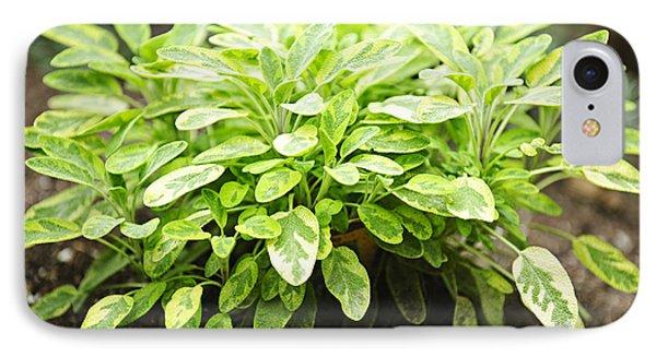 Sage Plant Phone Case by Elena Elisseeva