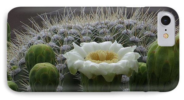 Saguaro Crown IPhone Case by Feva  Fotos