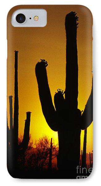 Saguaro Sunset IPhone Case by Sandra Bronstein