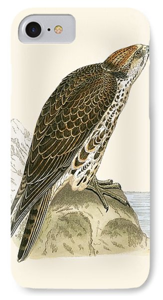 Saker Falcon IPhone Case by English School