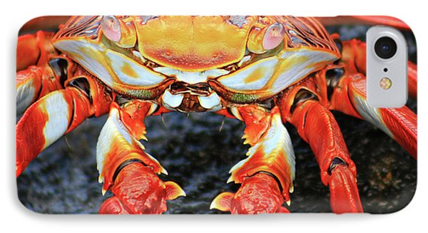 Sally Lightfoot Crab IPhone Case by Sue Cullumber