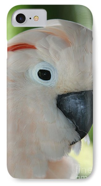 Salmon Crested Moluccan Cockatoo IPhone Case by Sharon Mau