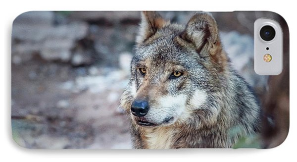 Sancho Searching The Area IPhone Case by Elaine Malott