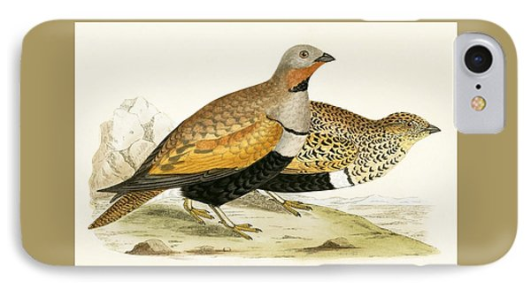 Sand Grouse IPhone Case