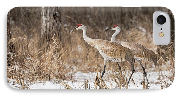 Sandhill Crane 2016-4 IPhone Case by Thomas Young