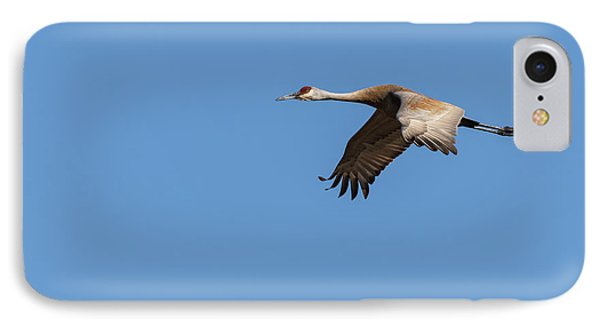 Sandhill Crane 2017-1 IPhone Case by Thomas Young