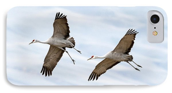 Sandhill Crane Approach IPhone Case by Mike Dawson