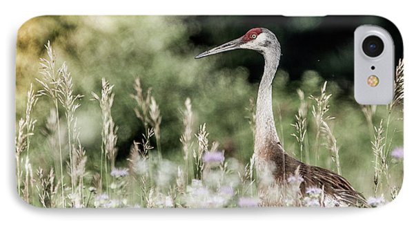 Sandhill Crane Phone Case by Cathy Cooley