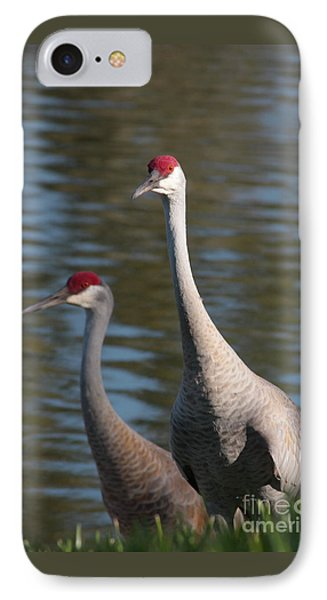 Sandhill Crane Couple By The Pond IPhone 7 Case