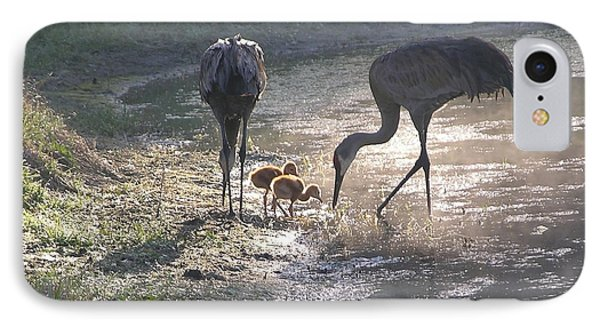 Sandhill Crane Family In Morning Sunshine IPhone Case