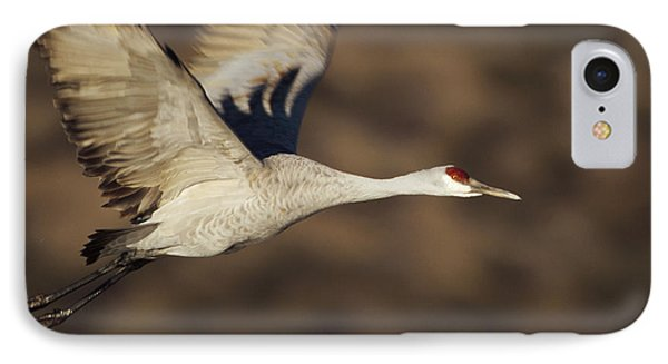 Sandhill Crane Flying Bosque Del Apache IPhone Case by Tim Fitzharris